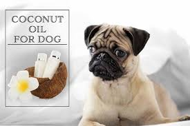 can i put coconut oil on my dog s fur