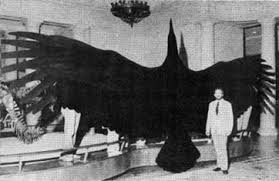 argentavis magnificens magnificent argentine bird with a wingspan of nearly 7 metres argentavis magnificens is the largest known bird to ever fly