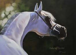 arabian horse oil painting on canvas by sami5