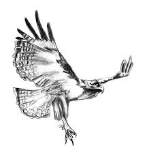 Small Picture Bird Coloring Pages Free Printable Realistic And Birds Of Prey