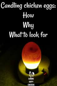 Egg Candling Chart Candling Eggs How To Watch A Speck Grow Into A Chick