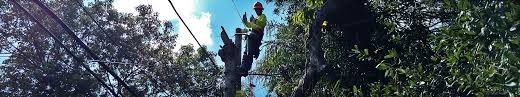 electrical power line installers and repairers maine electric power line contractor utility pole installation