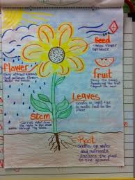 Anchor Chart Parts Of A Flower Science Anchor Charts