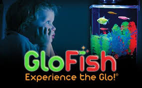 petco glofish. Interesting Petco Glofish021418img420w260hm With Petco Glofish T