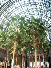 plant in winter garden atrium