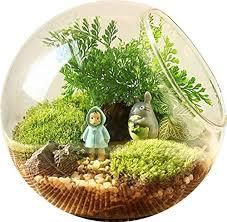king creative charming clear glass plant terrarium home decoration globe s set of
