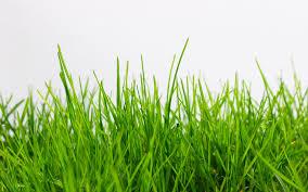 grass. Simple Grass To Grass