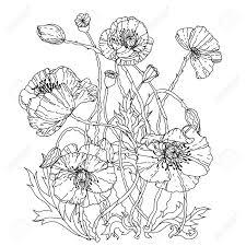 フィールド ポピーzenart スタイルの大人の塗り絵の春パターン手描きレトロ落書きベクトルuncolo
