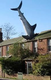 Risultati immagini per shark fail