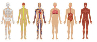 the 7 biggest mysteries of the human body