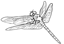Small Picture FREE Dragonfly Coloring Page 5