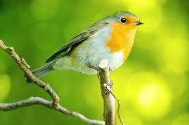 Summer Bird Watching Tips | Sweeney Feeders