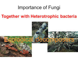 Chapter 14 Fungi Heterotrophic Organisms Once Considered To Be