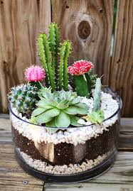 Small Picture Best 25 Cactus garden ideas ideas on Pinterest Outdoor cactus