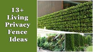 fast growing living fence plants. fencing ideas for privacy 6 13 living fences fast growing fence plants