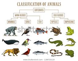 Classification Animals Reptiles Amphibians Mammals Birds