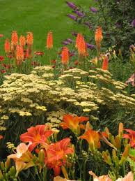 Small Picture 1387 best plant combos 2 images on Pinterest Flower gardening