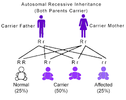 Patterns Of Inheritance Simple Genetic Inheritance Retina Australia Fighting Blindness