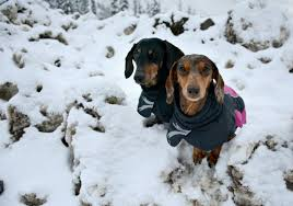 Never Fear Sizing For Hurtta Dog Jackets Is Easy