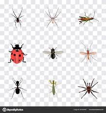 Tarantula Web Design Set Of Insect Realistic Symbols With Tarantula Fly Ladybug