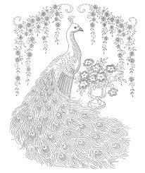 Small Picture Adult Picture Of Peacock To Color A Throughout Peacock Coloring