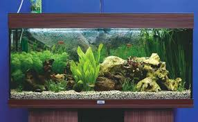 Scenic Freshwater Aquariums Beautiful Shower Ideas Exciting