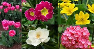 top 60 flowers to plant for spring with
