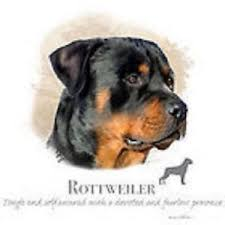 Rottweiler Size Chart Details About Rottweiler Robinson Pick Your Size T Shirt Youth Small 6 X Large