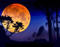 beautiful moon s