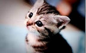 Funny Kittens Wallpaper - Hd Wallpapers ...