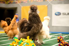 puppy bowl 2015 halftime.  Bowl The SceneStealing Newcomer Throughout Puppy Bowl 2015 Halftime