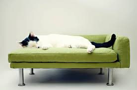 and finally the perfect cat sized chaise lounge chic cat furniture