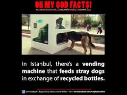 Dog Vending Machine Stunning Bottle Recycling Machine That Feeds Stray Dogs YouTube