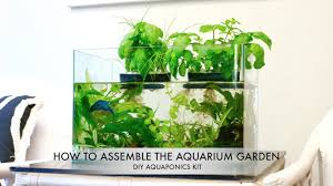 aquarium garden.  Aquarium The Aquarium Garden DIY Aquaponics Kit Inside Q