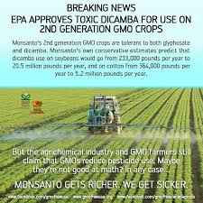 Image result for Dicamba nightmare kills everything