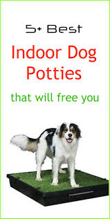 Dog Bathroom Accessories 17 Best Ideas About Indoor Dog Potty On Pinterest Potty Training