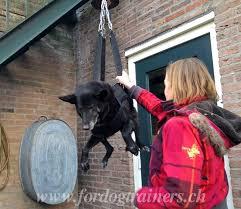 Viele kinder wachsen mit tieren auf, sie können sich einen alltag ohne haustiere gar nicht vorstellen. Rettungsgeschirr Aus Nylon Fur Schaferhund Und Diensthunde Hr1 1056 Rettungsgeschirr Aus Nylon Onlineshop Hunde Maulkorb Und Hundegeschirr Hundehalsbander Schweiz