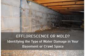 Mold Prevention U0026 RemovalMold In Basement