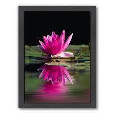 lotus flower framed photographic print on metal lotus flower wall art with lotus flower metal wall art wayfair