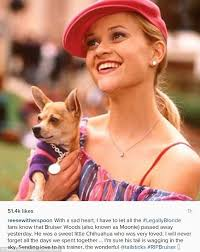 best legally blonde online ideas watch legally  reese erspoon breaks sad news her legally blonde chihuahua died