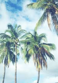 palm trees tumblr vertical. Find This Pin And More On {palm Trees} By Theblondebelle. Palm Trees Tumblr Vertical