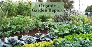 Small Picture Desert Garden Design Ideas Organic Garden Report
