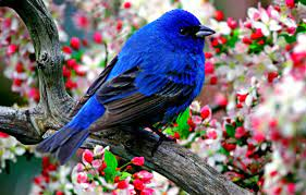 Most Beautiful Wallpapers Free Download ...