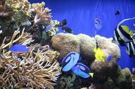 Reef Tanks Mini Reef Aquarium Guide