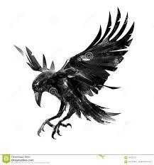 ворона летания чертежа на белой предпосылке изолированный эскиз