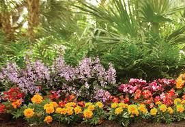 how to plant a garden. How To Plant Flowers A Garden N