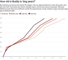 Dog Life Expectancy Chart What Dog And Cat Years Really Mean Answers With Joe