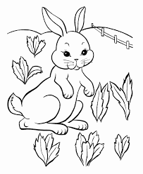 realistic rabbit coloring pages. Perfect Realistic Realistic Rabbit Coloring Pages For Preschoolers  Best Drawing Bunny Inside R