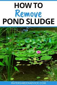 how to remove pond sludge water