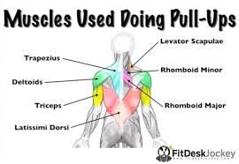 How To Do More Pull Ups For Beginners Fit Desk Jockey